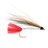 Black Nose Dace Stl.8
